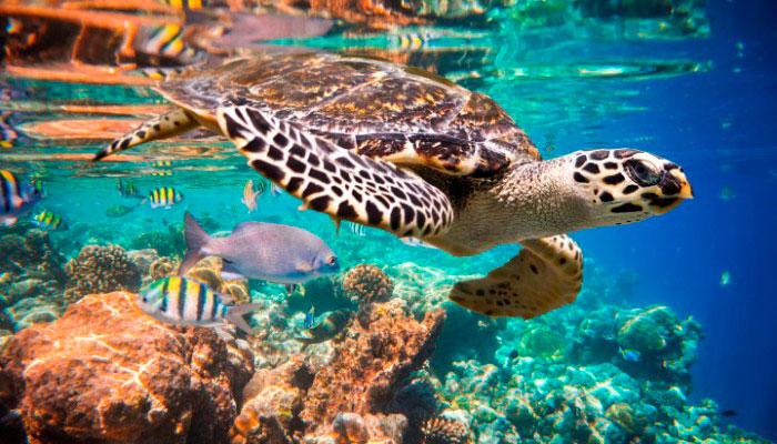 snorkel in akumal